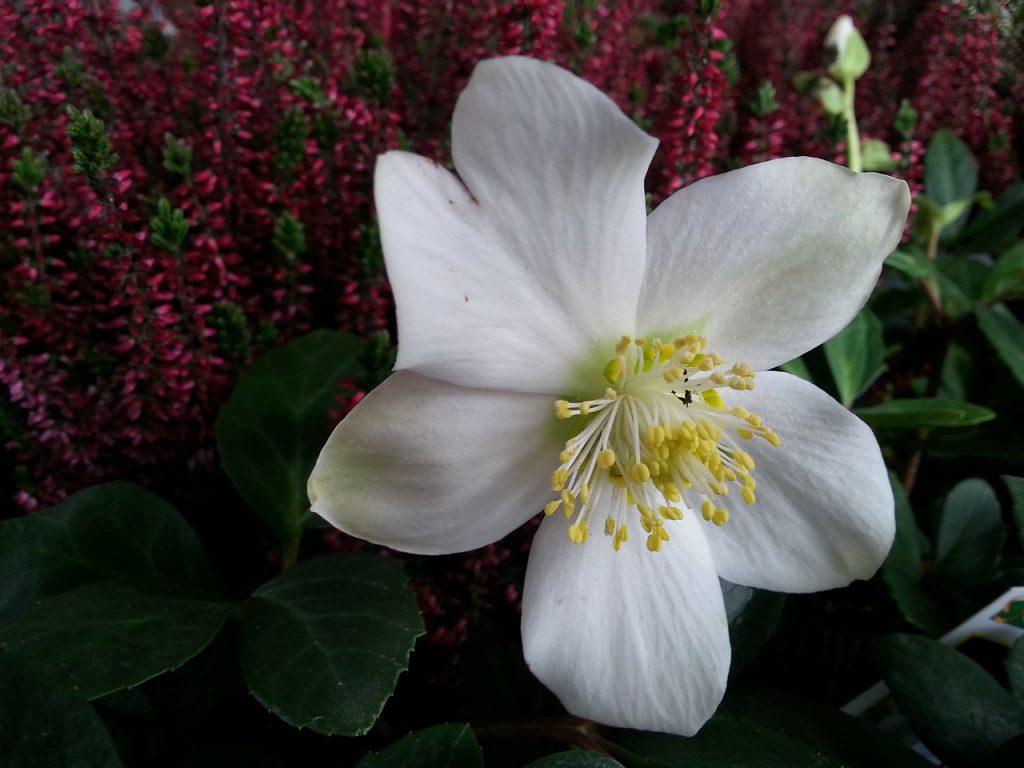 Tuintaken december - Tuinkalender